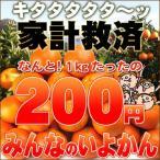 柑橘 - 家計救済みんなの100円いよかん(訳あり・不選別・不揃い)1kg200円で20kgまでお好きなだけどうぞ♪