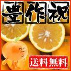 柑橘类 - 大豊作みしょうかん7kg【送料無料】【和製グレープフルーツ】訳あり・不揃い美生柑(別名 河内晩柑・宇和ゴールド)