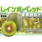 奇異果 - 愛媛産 レインボーレッド2kg 平均糖度20度超!キウイの王様!送料無料