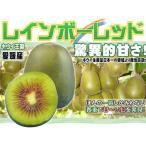 奇異果 - 愛媛産 レインボーレッド4kg 平均糖度20度超!キウイの王様!送料無料
