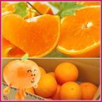 柑橘類 - 紅まどんな(家庭用)5kg 送料無料不揃い