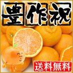 柑橘類 - 大豊作祝いデコみかん20kg【送料無料】訳あり・不揃い