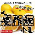 橘子 - 大豊作祝いの小夏(ニューサマーオレンジ)10kg【送料無料】訳あり