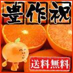 柑橘類 - 大豊作祝いせとか5kg送料無料