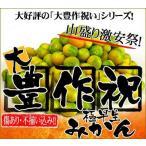柑橘類 - 最安値に挑戦!極早生大豊作祝いみかん20kg 送料無料 訳あり