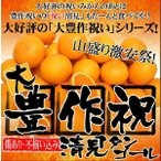 柑橘类 - 大豊作祝い清見タンゴール10kg×2【送料無料】訳あり・ご自宅用