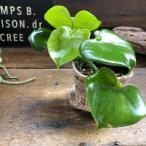ハートフィロデンドロン ハート型の観葉植物