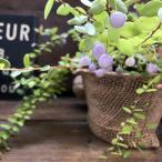 パワーストーンの実 真珠コケモモ 実つき 観葉植物 プレゼントに