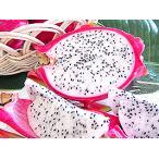 ●完売御礼●【送料無料】沖縄・石垣島産ドラゴンフルーツ約1kg(秋 フルーツ)