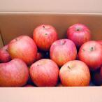 信州産 りんご サンふじ (規格外品) 10kg