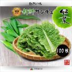 新鮮 サンチュ 100枚(10束) /焼肉素材韓国野菜類 焼肉といえば野菜は 新鮮 サンチュ