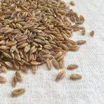 スーパー大麦 バーリーマックス 500g オーストラリア産