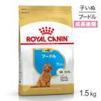 プードル子犬用1.5kg