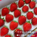 【アグリハウス秋山】福島いちご 須賀川産 とちおとめ苺 270g×4パック
