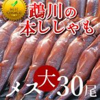 ししゃも 鵡川「メス大30尾」 北海道産むかわ 子持ちししゃも 本物 北海道干物セットお土産  北海道 海産物ギフト 贈り物