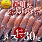 ししゃも 鵡川「メス特30尾」 北海道産むかわ 子持ちししゃも 本物 北海道干物セットお土産  北海道 海産物ギフト 贈り物