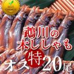 ししゃも 鵡川「オス特20尾」 北海道産むかわのししゃも 本物 北海道干物セットお土産  北海道 海産物ギフト 贈り物