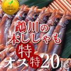 ししゃも 鵡川「オス特特20尾」 北海道産むかわのししゃも 本物 北海道干物セットお土産  北海道 海産物ギフト 贈り物