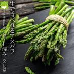 芦笋 - アスパラ 送料無料 北海道富良野産 グリーンアスパラ 2kg(M1kg・L1kg)