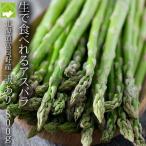 蘆筍 - アスパラ  北海道グリーンアスパラ 富良野産 訳あり800g入り
