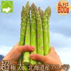 アスパラガス 北海道 グリーン アスパラ 超極太 4Lサイズ 500g 富良野産 送料無料