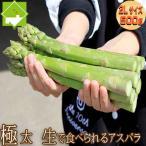 アスパラガス 北海道 富良野産 グリーン 2Lサイズ 500g 送料無料