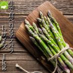 アスパラガス 北海道 富良野産 ハウス栽培 グリーンアスパラ Lサイズ 1kg 送料無料 4月上旬から5月上旬