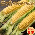 とうもろこし 生で食べれるトウモロコシ 北海道富良野産 恵味(めぐみ) 2Lサイズ 5本入り 送料無料