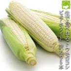 とうもろこし 訳ありピュアホワイト 10本入り 北海道富良野産 送料無料