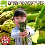 蘆筍 - アスパラ 送料無料 北海道グリーンアスパラ 訳あり 500g
