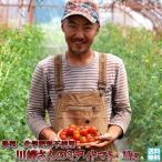 トマト 北海道 当麻産 川端さんの ミディトマト 1kg