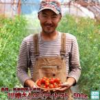 トマト 北海道 当麻産 川端さんの ミディトマト 500g