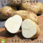 生で食べれる じゃがいも 北海道産 送料無料 はるか 10kg 別途送料が発生する地域あり