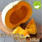 かぼちゃ 送料無料 10kg 北海道産 雪化粧