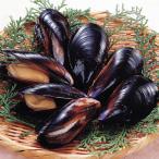 冷凍食品 業務用 殻付きボイルムール貝 500g 焼物 蒸し焼き パエリア むーるがい カイ