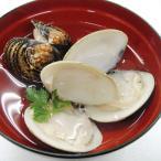 グルメ 冷凍食品 業務用 殻付ハマグリ500g (16〜20粒入) 21766 弁当 蛤 はまぐり 貝 魚介類
