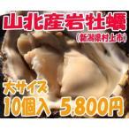 新潟村上山北産岩牡蠣(イワガキ)大サイズ10個入|日本海笹川流れ
