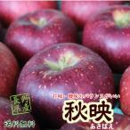 ≪今が旬≫信州産 秋映 約5kg(14-20玉)この時期食べるりんごならこれで決まりです!
