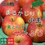 ショッピング皮 信州産 葉とらずサンふじ 10kg 『小玉』(40-46玉) 安心安全 是非皮ごと食べてください。