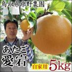 中野農園[あたご梨]5kgセット(自家用:5-12玉入り)[送料無料][常温]鳥取県産[農家指定商品]