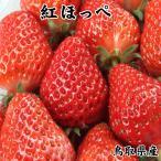 【 紅ほっぺ (鳥取県産いちご)】1kg程度(250g×4パック入り箱)送料無料!苺・イチゴ