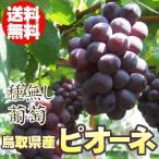 送料無料 鳥取県産 種無し ぶどう ピオーネ 約2kg前後で3-5房入 冷蔵 ブドウ