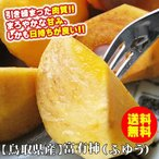 柿子 - (柿 かき)富有柿(ふゆうかき)進物用5kgセット(18-24玉入り)〔送料無料〕