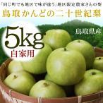 20世紀梨 かんど地区産限定 二十世紀梨 自家用 訳あり 5kgセット 送料無料 鳥取県産 2.5キロ×2箱の場合あり