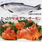 送料無料 とっとり琴浦グランサーモン 養殖銀鮭・ギンザケ 1匹 800-900g程度 活締め 冷蔵便 鳥取県産