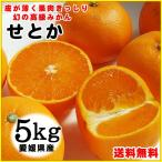 幻の高級みかん 愛媛県産 せとか 訳あり 5kgセット 送料無料 常温