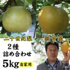 新甘泉と二十世紀梨の詰め合わせ 5kgセット 自家用 訳あり:12-18玉入り 送料無料 常温 鳥取県産 中野農園