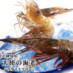 送料無料 お刺身用 天使の海老 1kgセット(50-60尾程度入)業務・パーティー・まとめ買い用[冷凍]エビ