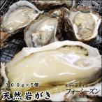 (カキ イワガキ 岩ガキ)送料無料(山陰産) 天然岩牡蠣[生]大 7個セット(300g前後が7個入)*(1配送先で2セット以上お買い上げで1セット増量)