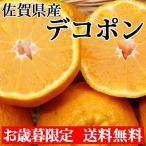 デコポン 1.2kg 送料無料 佐賀県産